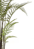 Tall Faux Forest Fern Plant