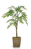 Ficus Benjamina Weeping Fig Tree - Artificial Green