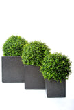 Topiary Balls In Pots