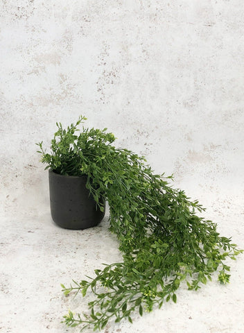Faux trailing boxwood plant