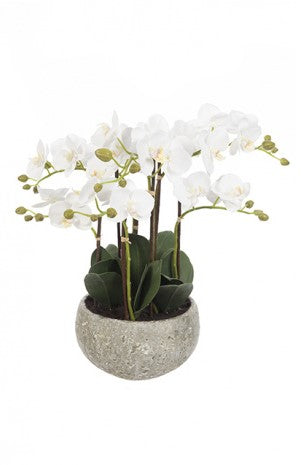 47cm White Phalaenopsis Orchid Display In Clay Pot