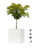 White Square Planters - Various Sizes