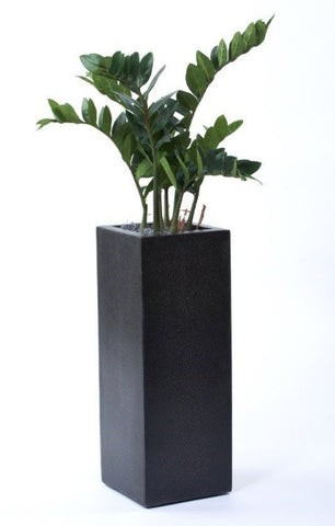 Zamiifolia Arrangement in tall planter