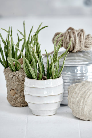 Flora Cactus Succulent Plant by Lene Bjerre at Artificial Green UK