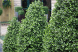 Artificial Boxwood Buxus Shrubs and Trees