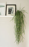Faux trailing grass plant by Artificial Green