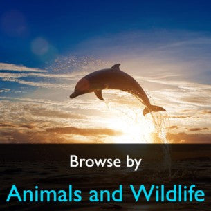 Animals and Wildlife