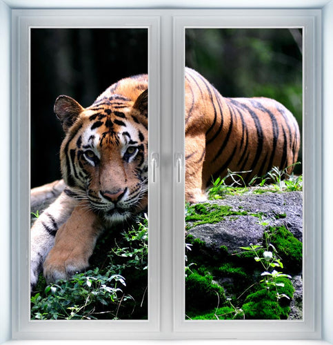 A Tiger Instant Window