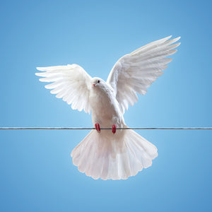 A Dove on Wire Wall Mural
