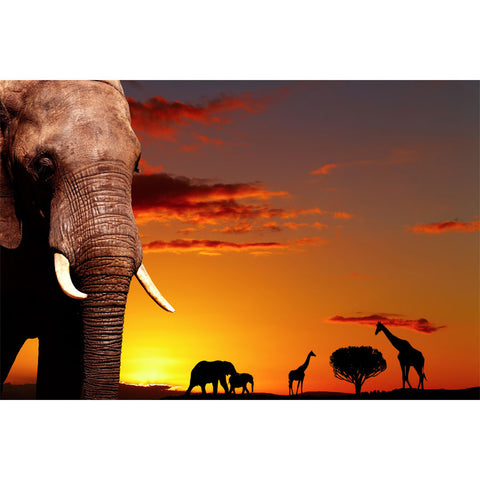 African Nature Wall Mural