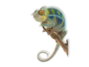 Ambanja Panther Chameleon Wall Decal