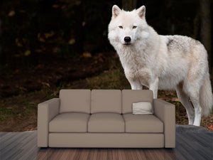 Arctic Wolf Wall Mural