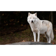 Load image into Gallery viewer, Arctic Wolf Wall Mural