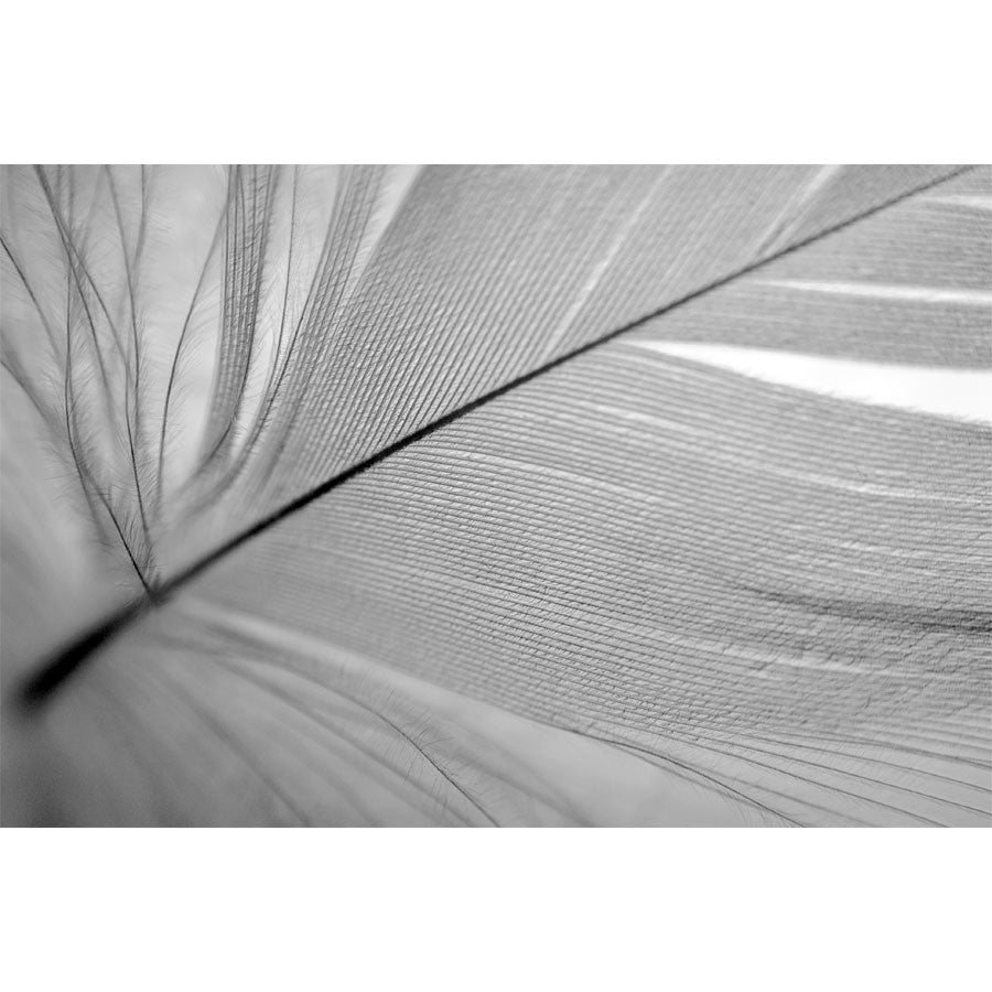 Black and White Feather Close-up Wall Mural