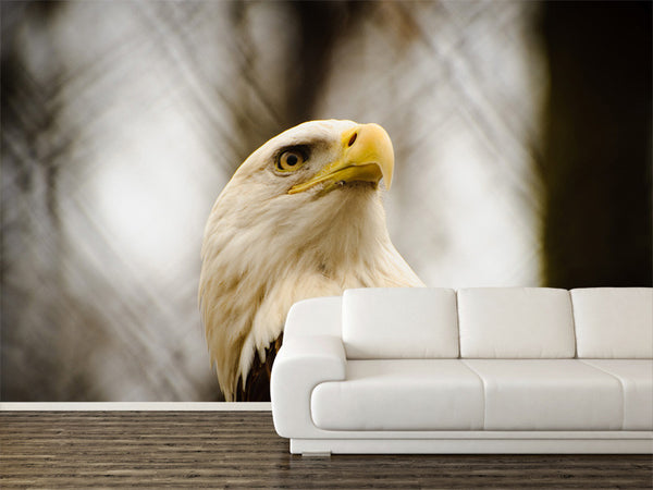 Bald Eagle Wall Mural