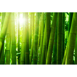 Bamboo Forest with Morning Sunlight Wall Mural