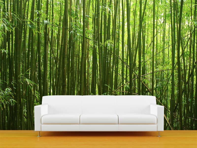 Bamboo Forest Wall Mural Majestic Wall Art - Vinyl wall decals bamboo