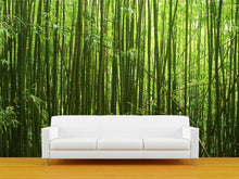 Load image into Gallery viewer, Bamboo Forest 1 Wall Mural