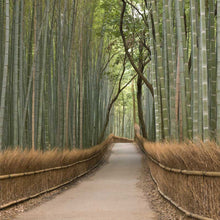Load image into Gallery viewer, Bamboo Grove Wall Mural