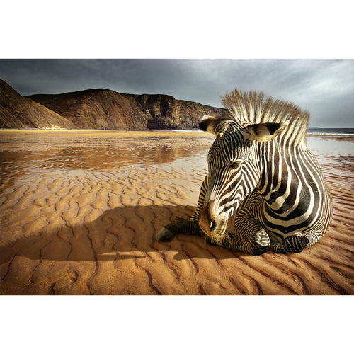 Beach Zebra Wall Mural