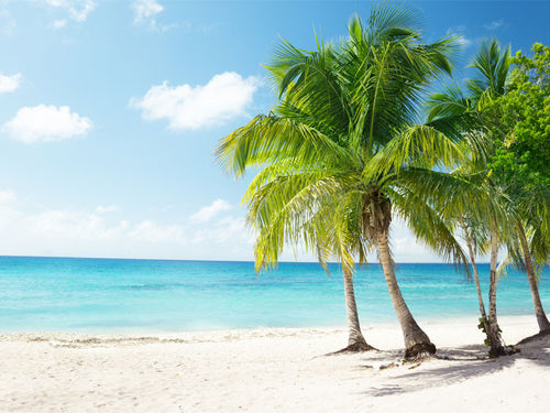 Beach in Caribbean Wall Mural