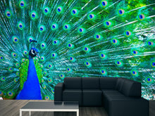 Load image into Gallery viewer, Peacock Wall Mural