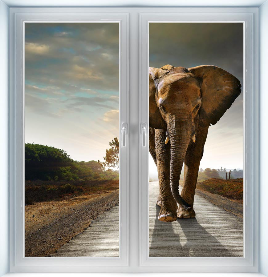 Big Elephant Instant Window