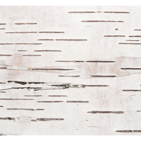 Birch Bark Texture Wall Mural