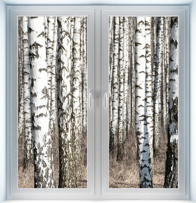 Birch Tree Instant Window