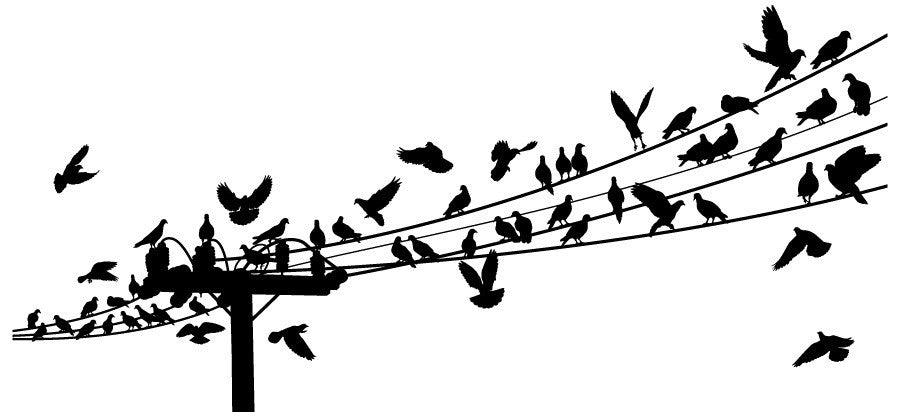 Birds Roosting on Telegraph Line Wall Decal