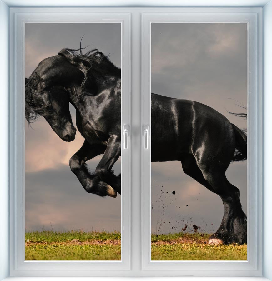 Black Stallion Instant Window