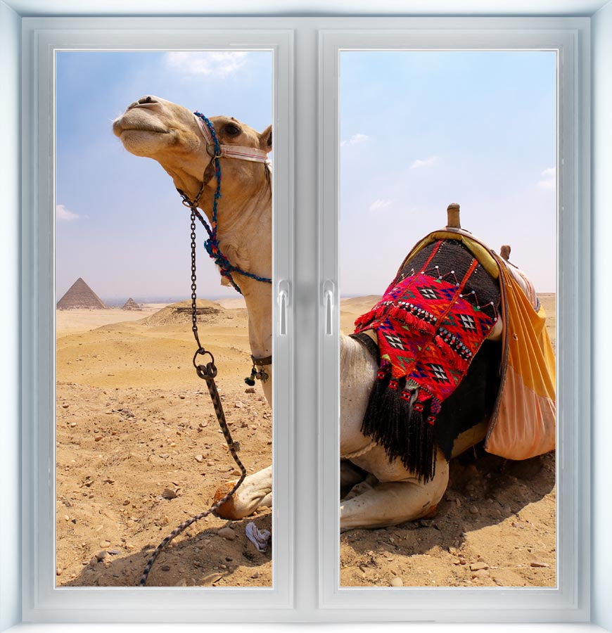 Camel and Pyramids Instant Window