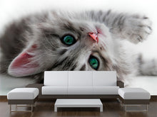 Load image into Gallery viewer, Cat Wall Mural