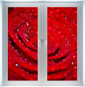 Close Up of Rose Instant Window