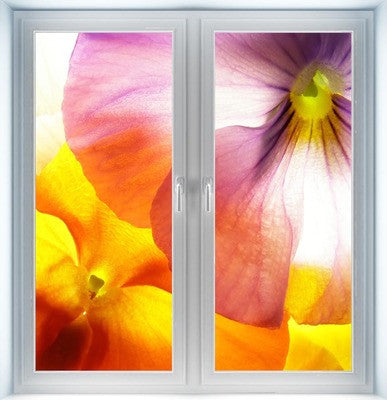 Colorful Viola Instant Window