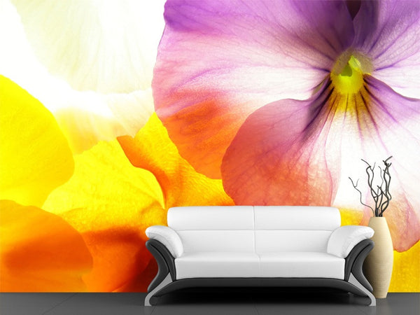 Colourful Viola Wall Mural