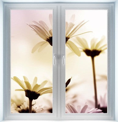 Daisies Instant Window