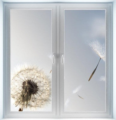 Dandelion Blowing Seeds Instant Window