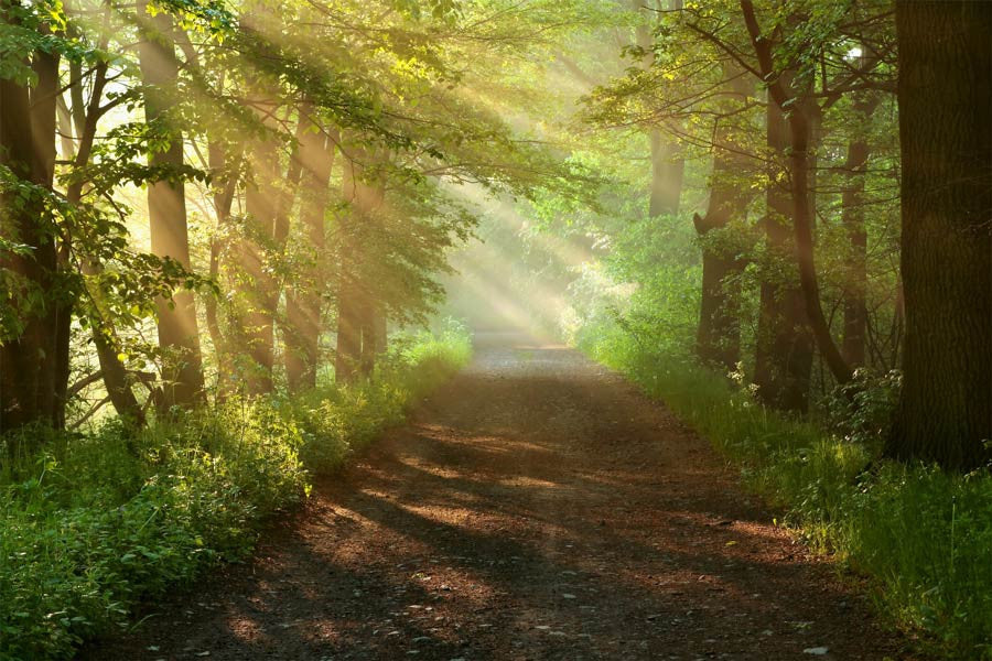 Dirt Road in Morning Forest Wall Mural