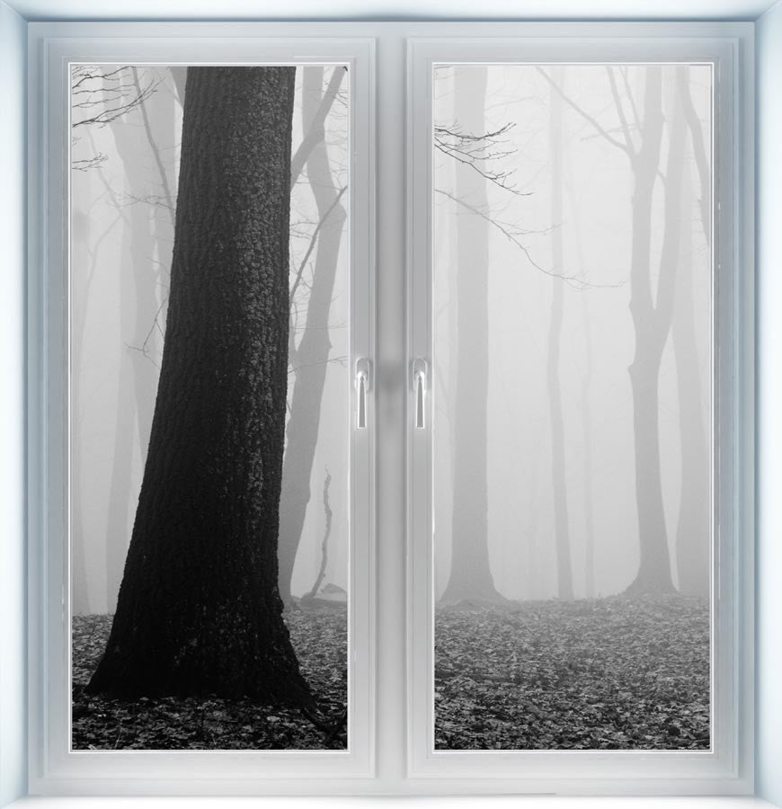 Forest of Fog Instant Window