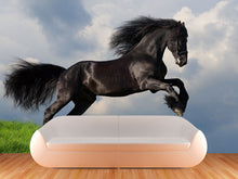 Load image into Gallery viewer, Friesian Stallion Wall Mural