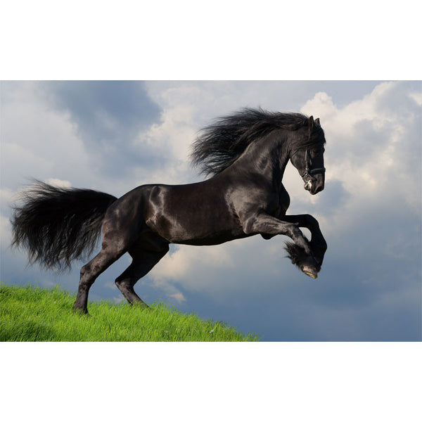 Friesian Stallion Wall Mural