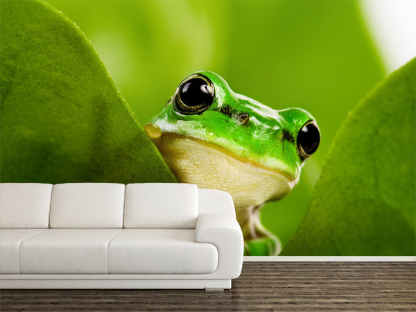 Frog Peeking Out  Wall Mural