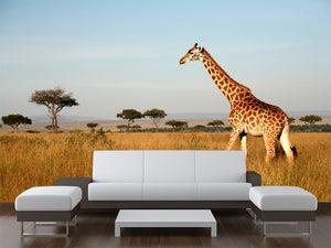 Giraffe Walking Through the Grasslands Wall Mural