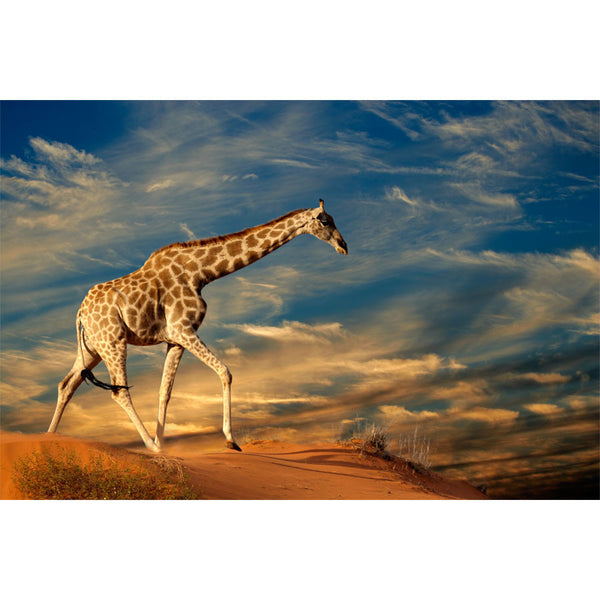 Giraffe on Sand Dune Wall Mural