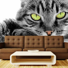 Load image into Gallery viewer, Green-eyed Cat Wall Mural
