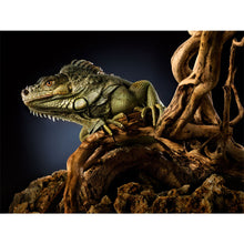 Load image into Gallery viewer, Green Iguana Wall Mural
