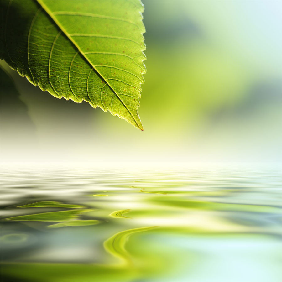 Green Leaf Reflecting In River  Wall Mural