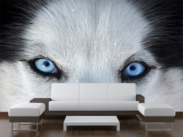 Husky Blue Eyes Wall Mural