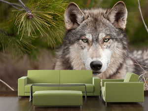 Intense Time Wolf Wall Mural